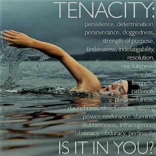Tenancity2